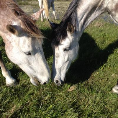 Bertie et Quiera